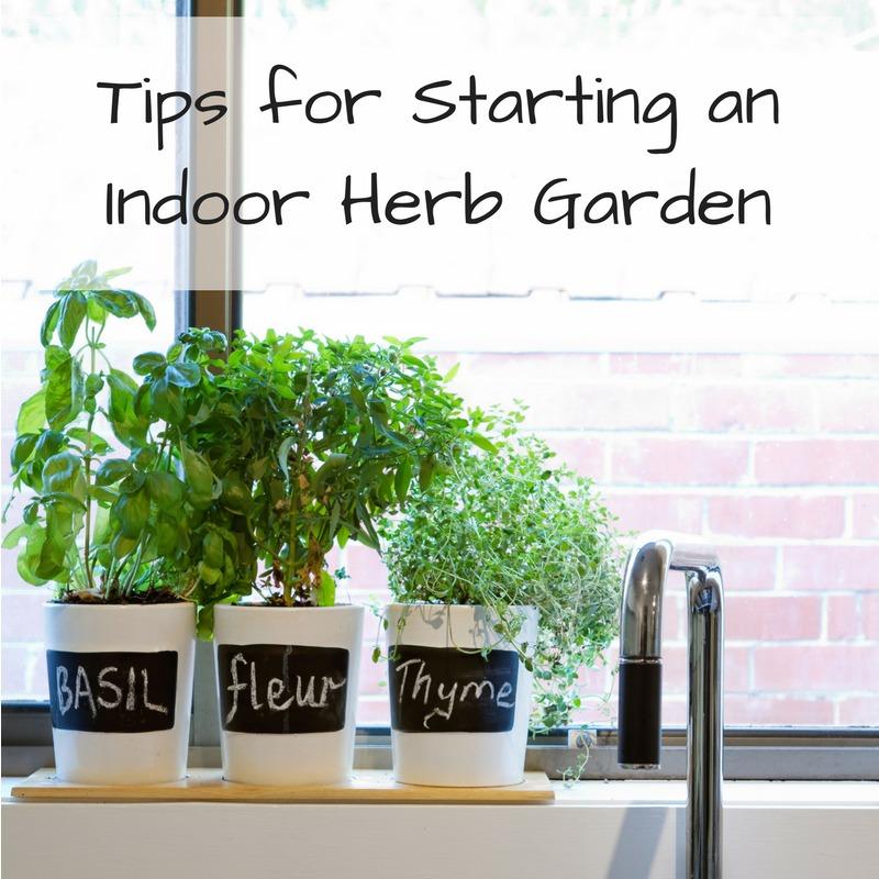 Tips For Indoor Gardening: Tips For Starting An Indoor Herb Garden